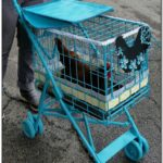 Diy Chicken Stroller