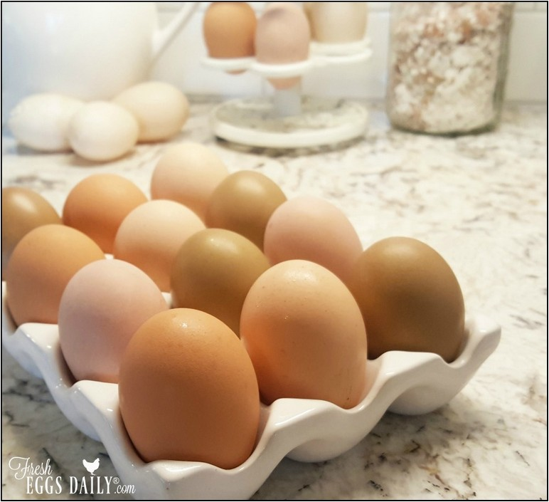 Do Fresh Eggs Need To Be Refrigerated