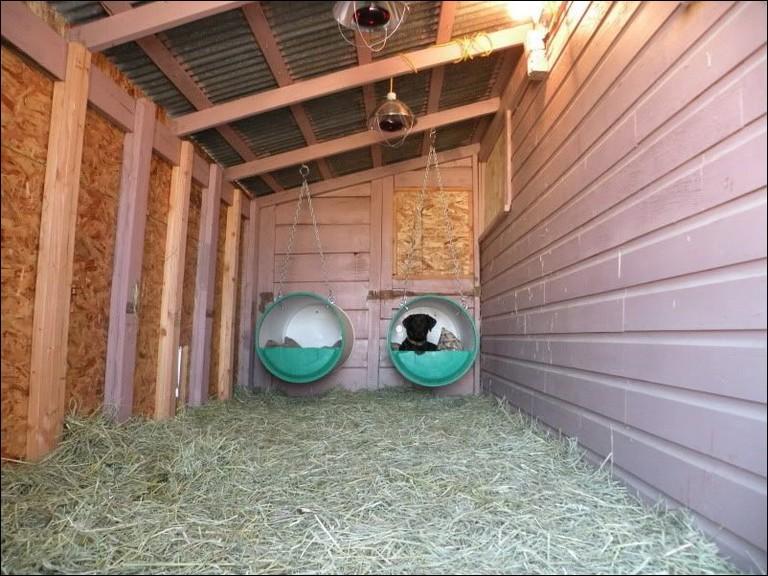 Outdoor Heat Lamp For Dog House