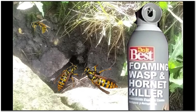 Best Spray For Killing Yellow Jackets