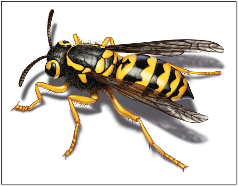Getting Rid Of Yellow Jackets In Siding