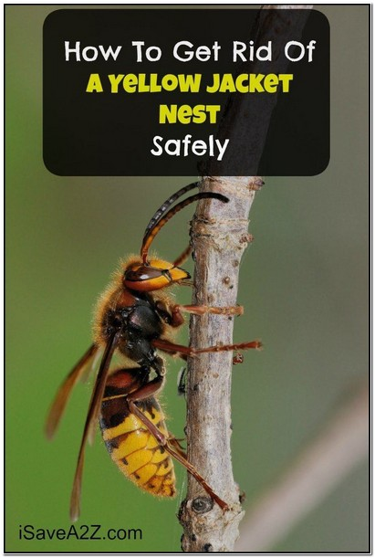 How To Get Rid Of Yellow Jacket Nest